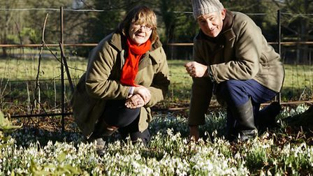 Brinton Hall secret garden opens to the public to view the winter flowing snowdrops around the groun