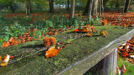 Autumn is fading at Felbrigg Woods. Picture by Laura Baxter