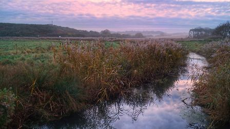 Wintery colours on Cley marshes. Photo: Brad Damms