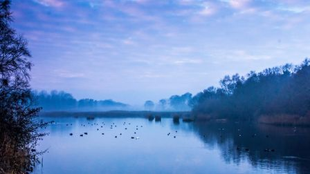 The mist starting to rise over one of the lakes as the light starts to fade at Pensthorpe. Photo: Ri