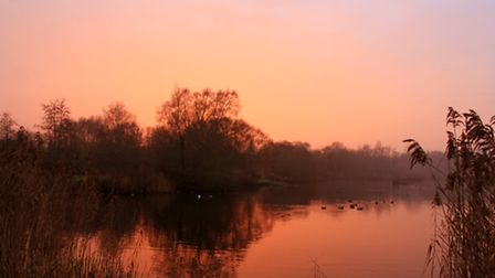 A glorious sunset as it sinks below the trees at Pensthorpe, giving off a lovely red glow. Photo: Ri