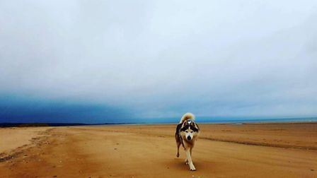 Lovely afternoon at Holkham. Photo: Mark Herring