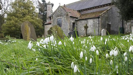 Snowdrops at Thorpe Market Church. Picture: Paul Damen