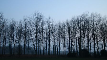 A-line-of-trees-caught-in-the-