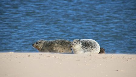 Sun--Sand-and-Seals--Picture--
