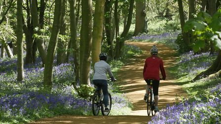 The National Trust has opened a new all-weather, multi-use trail at Blickling. Picture: NationalTrus