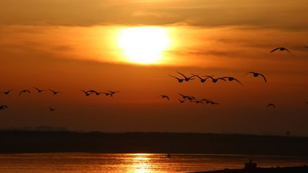 Watching the Sunrise at Wells-Next-The-Sea with only the Geese for company. Photo: Martin Sizeland