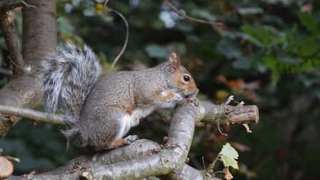A lovely grey squirrel. Picture: Martin Seuneke