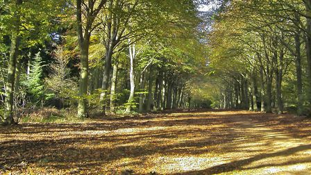 Autumn in Felbrigg Hall. Picture: Peter Bash