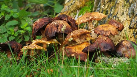 Wonderful array of fungus. Picture: Andy Brown