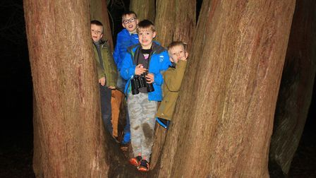 On the hunt for night time woodland creatures at Enchanted Felbrigg. Photo: KAREN BETHELL