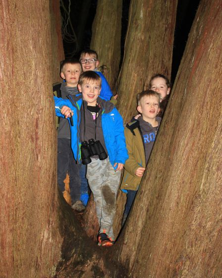Woodland fun at the Enchanted Felbrigg event. Photo: KAREN BETHELL