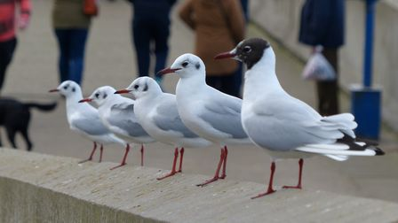 Seagulls waiting for those chips Photo: Lesley Buckley