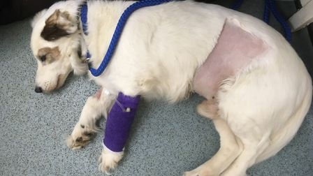 Jake is now recovering. Picture: Tess Bickerstaff