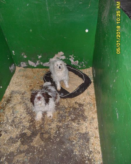 The pens the dogs were kept in. Picture: NNDC