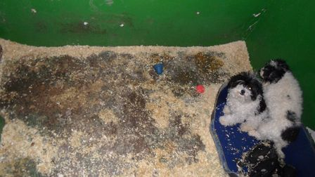 Pictures capture the condition the dogs were found in. Picture: NNDC