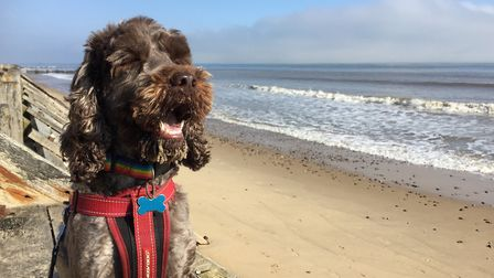 Michelle Savage was out walking her dog on the beach at Trimingham in north Norfolk when part of a c