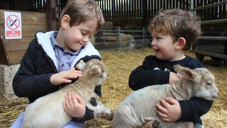 Sharing a cuddle with a couple of lambs at Felbrigg Hall Farm. Photo: KAREN BETHELL