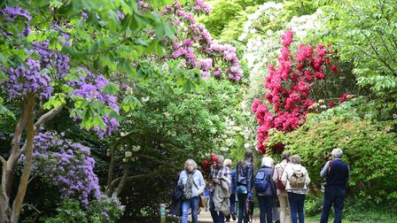 Rhododendrons and Azaleas in full bloom at Sheringham Park, where the north Norfolk branch of Diabet