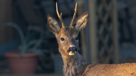 This deer was having a good nap in the sunshine, then noticed me with camera got up and jumped the 6