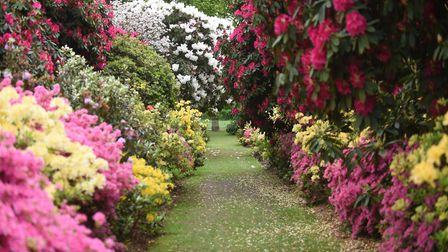 The Azalea Walk at Stody Lodge Gardens, which will be hosting a Big Gay Out on May 26 in aid of Norw