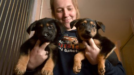Dogs rescued from a puppy farm in Wales being cared for at Hillside Animal Sanctuary. Cheryl Copelan