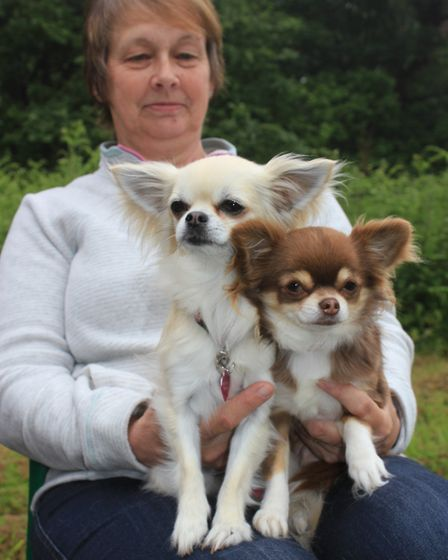 Margaret White, of Southrepps, with Chihuahuas Roxy and LilyPhoto: KAREN BETHELL