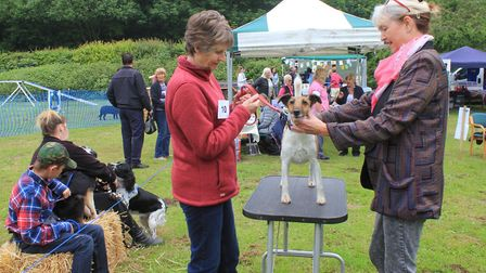 Judge Penny Sands (right) looks over a competitor at North Norfolk District Council's Doggy Day OutP