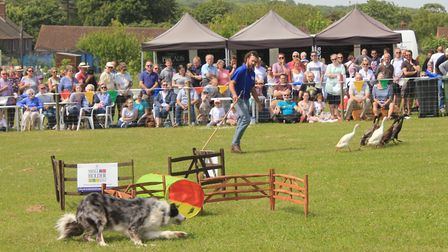 The dog and duck show in the main arenaPhoto: KAREN BETHELL