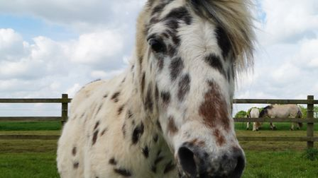 Cookie is celebrating his 21st birthday at Redwings Aylsham.