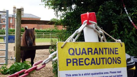 Isaac the horse in quarantine field at horse sanctuary. Picture: Redwings