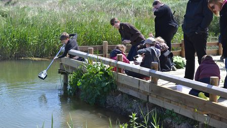 Cley Calling pond dipping. Picture: NWT