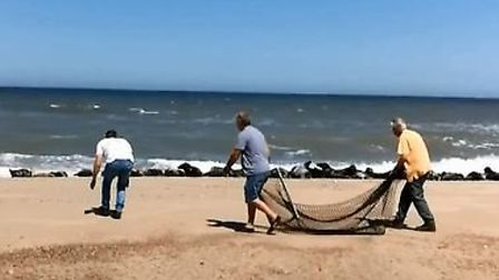An image from the video of a seal rescue on Waxham beach. Picture: LORNA BURROUGHS