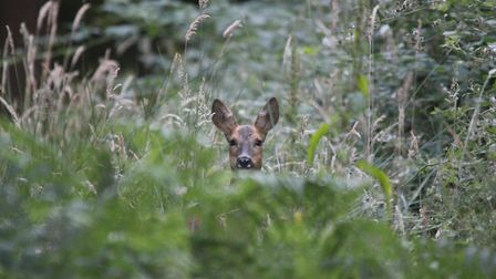Walking the woods and you get that feeling your being watched. Photo: Charlotte Watlow