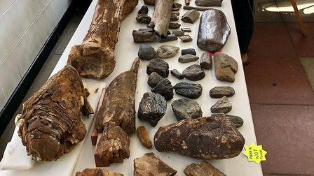 Dan Chamberlain with his collection including the 2 million year old Southern mammoth tibia, Photo:
