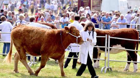 Last year's Aylsham Show.Picture: Nick Butcher