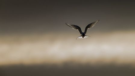 Arctic Angel, by photographer Paul Richards, whose work will be on show at the Norfolk Wildlife Tru