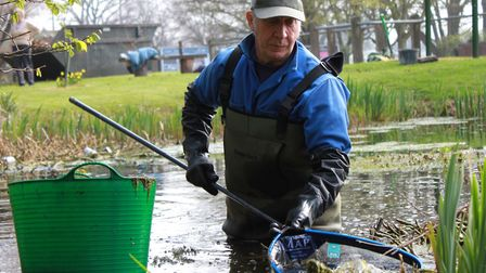 Bluebell Pond Society's George Blackburn checks his net for newts, frogs and fish. Photo: Karen Beth