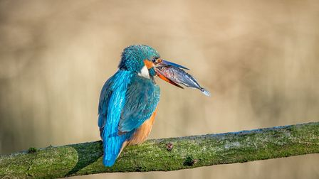 Kingfisher and Stickleback eye to eye by Nick Akers.