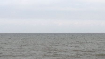 A basking shark was spotted swimming off the coast at Walcott yesterday. Photo: AMELIA MILLS