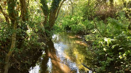 The Gur Beck, a tributary of Scarrow Beck and River Bure, running through Spurrell''s Wood. Picture:
