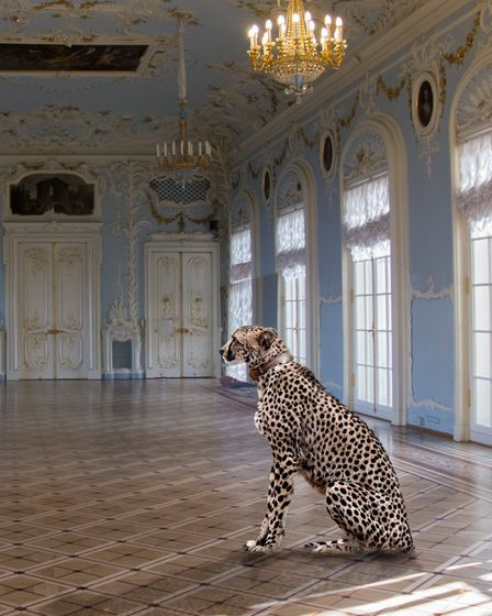 Photo by Des King of the Buxton Photographic Club: 'A posh pet at The Hermitage St Petersberg'. Pict