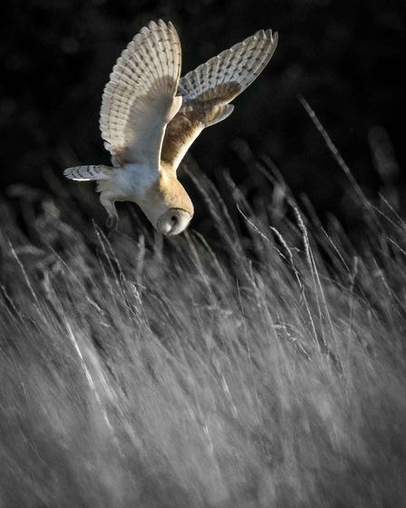 Barn owl by Mark Ellis was one of the winning photographs from the Buxton Photographic Society's se