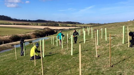 More than 400 trees planted as part of natural flood management project. Pictures: Environment Agenc