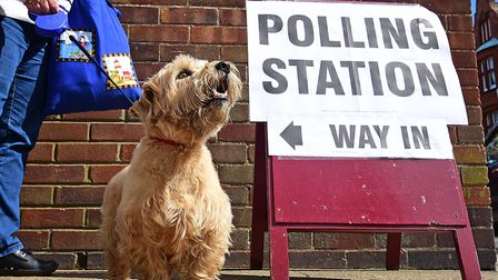Toby the Norfolk Terrier outside the polling station at Cromer Community Centre.Picture: ANTONY KELL