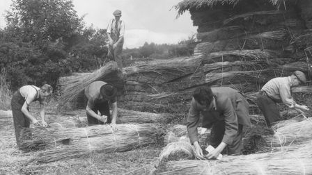 Bundles of reeds which will be used in America for thatching the Maine house of Miss Pamela Woolwort