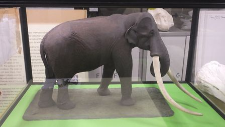 A model of the West Runton Mammoth. Picture: DR ANDREW TULLETT