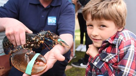 Lewis Clark, seven, meets a lobster at the Eastern IFCA stand at the Crab and Lobster Festival at Cr
