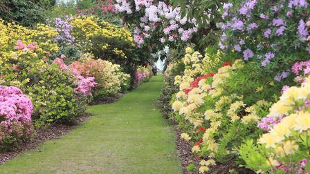 Stody Lodge Gardens, which will be hosting a tea party in aid of the British Red Cross on May 23 and