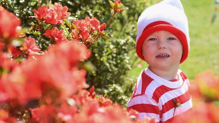 Arthur MacNicol, two, at the Where's Wally event at Stody Lodge Gardens. Picture: DENISE BRADLEY